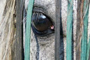 Tapis de selle, cet élément indispensable pour votre cheval