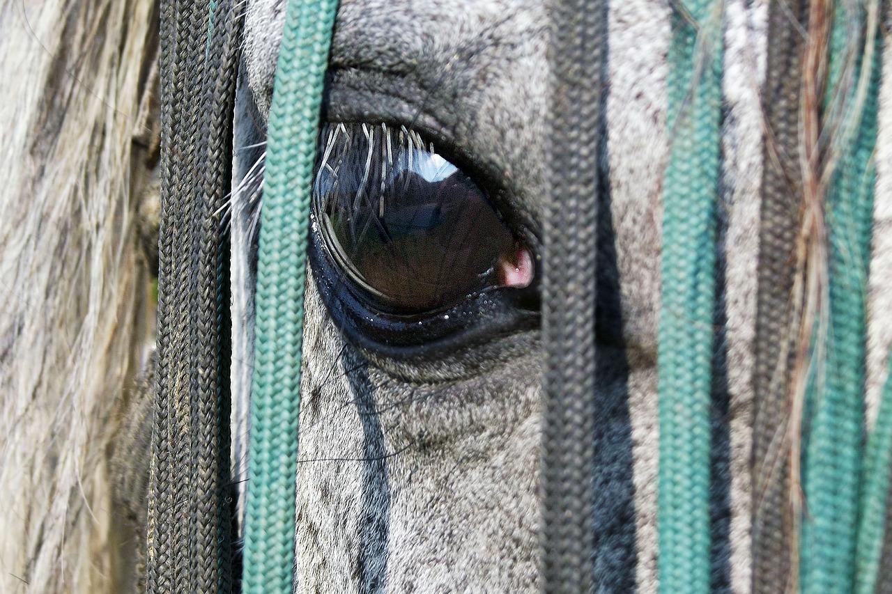 You are currently viewing Tapis de selle, cet élément indispensable pour votre cheval